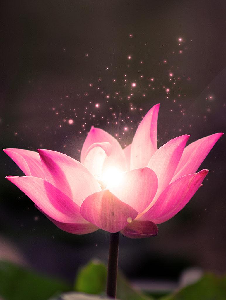 Tâm Phật là tâm bình đẳng, thanh tịnh tuyệt đối