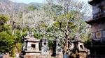 Sự linh thiêng kỳ lạ ở vườn tháp Huệ Quang