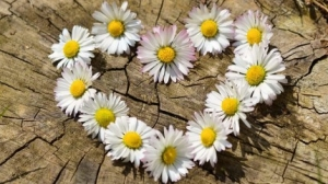 Mùa xuân là mùa tu phước